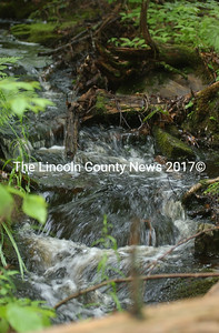 Somerville woods tour of the Brann Memorial Forest. Photo by Paula Roberts of Brann Brook.