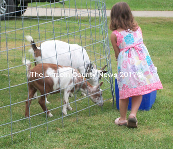 A girl feeds some goats Saturday at the Dresden Summerfest. (A. Brodsky photo)