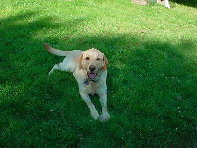 Therapy dog Sam. (Photo by Nancy Wilson)