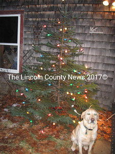 Sam, enjoying an early start to his Christmas season.