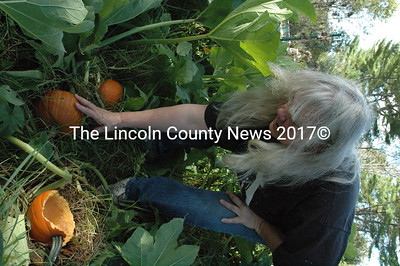 Susan Price shows off some of her tiny, nearly ripe, New England pie pumpkins on Sept. 16. (Samuel J. Baldwin photo)