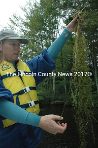 Karen Hahnel with the DEP invasive species program with a clump of hydrilla pulled from Davis Stream. (Samuel J. Baldwin photo)