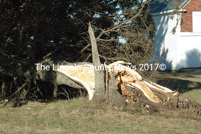 The winds during the Dec. 21 storm caused this large pine tree on the Vannah farm in Nobleboro to snap at ground level. (Laurie McBurnie photo)