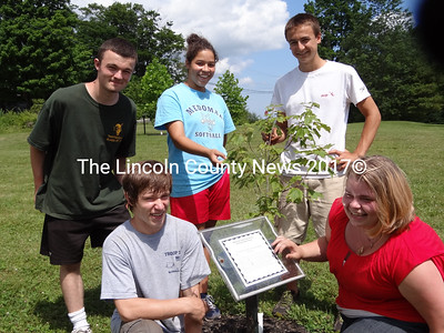 This young maple tree originated near the site of the home of Charles Huebner, a member  of the Crellius migration that brought approximately 50 families from Germany to Old Broad Bay in 1752. The Wurttemberg native settled on what is now Havener Point in Waldoboro. Members of the MVHS Teen Ag Crew are, from left, in front row: Deagen Poland, freshman, of Warren; 2012 MVHS graduate Susanna Prescott, of Washington; in back row: Mark Sweet, senior, of Union; Amanda Hendrickson, senior, of Friendship and Gavin Felch, sophomore, of Union. Not shown is crew member Joseph Lobley, sophomore, of Waldoboro. (Shlomit Auciello photo)