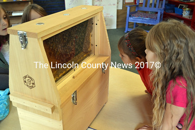 Wiscasset first graders Mallory and Leanna study the bees in a colony. (Kathy Onorato photo)