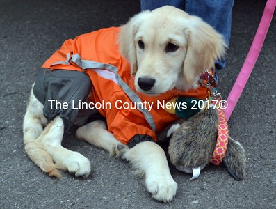 Pearl, a British golden retriever, comes disguised as a duck hunter, hoping to collect dog treats at this year's Trick or Treat Street in Alna. (Kathy Onorato photo)