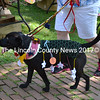 Piper, a rescue Lab mix, wears an outfit crocheted by her owner, Penney Daniels, in the dog parade during Summerfest in Wiscasset on Saturday, July 26. (Charlotte Boynton photo)