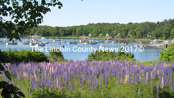 Lupine Field, the last 1.1 acre parcel of undeveloped land on the waterfront in Round Pond overlooks Round Pond Harbor. (Photo courtesy Kathy   Kearney)