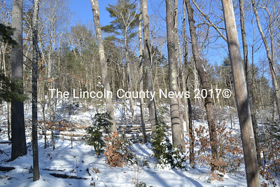 """The Chewonki Foundation will continue a tree harvest on Cushman Mountain with work to begin at a later hour after complaints of work beginning between 4:30-5 a.m. """"This was clearly an imposition to our neighbors,"""" Chewonki President Willard Morgan said. (Charlotte Boynton photo)"""