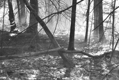 """A brush fire burned over 6.4 acres in Jefferson in May 2013. The fire, which occured on a Class 3 """"High"""" fire danger day, started when a tree fell on a powerline. Nearly 40 firefighters battled for two hours to stop the fire from spreading. (D. Lobkowicz photo, LCN file)"""