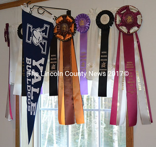 Prize ribbons hang with a Yale Bulldogs pennant at Wicked Good Bulldogges in Bristol. The breeder recently produced Yale University's new mascot. (Maia Zewert photo)
