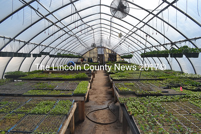 Plants from Morning Dew Farm fill one of the greenhouses at 49 Center St. in Damariscotta. (Maia Zewert photo)