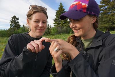 Examining Butterflies