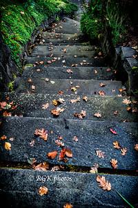 Garden Steps in Autumn
