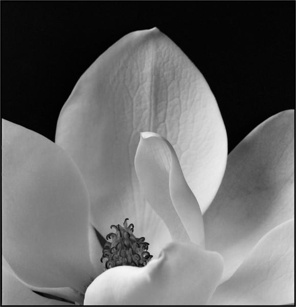 Magnolia 2, 120, 2014