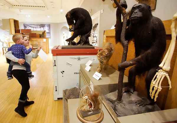 BEN GARVER — THE BERKSHIRE EAGLE<br /> Christie Kaiser and her son Jeremiah, age 3, check out a  variety of specimens from the museum collection at the Berkshire Museum, Wednesday, January 23, 2019.