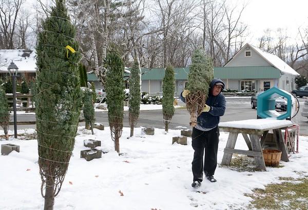 Chenail's Christmas Trees for sale - 112216