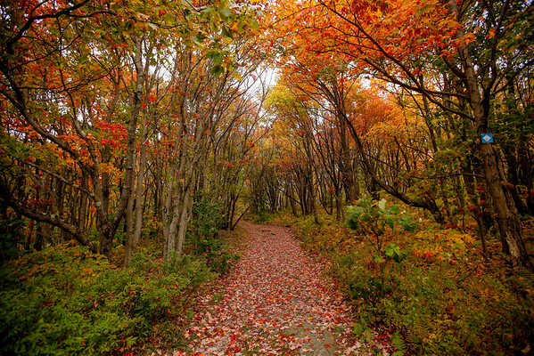 Fall Colors at Pittsfield State Forest