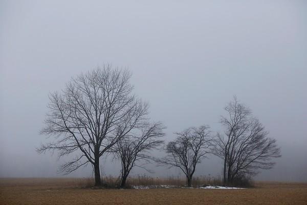 In the fog on Feb. 15 -021518