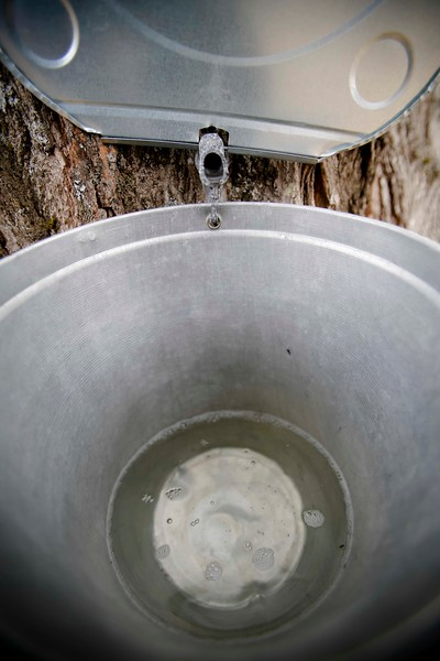 Maple Sugaring at Flynn family farm stand in Pittsfield-033017