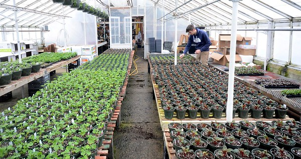Mount Williams Greenhouse- -021317