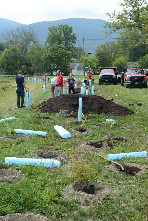. About 800 native shrubs and trees were planted along the drain swale at the former Spruces mobilehome park in Williamstown. Volunteers from North Branch Nursery, members of Hoorwa or the Hoosic River Watershed Association, and Williams College students planted most of the day on Thursday, September 1, 2016. Gillian Jones � The Berkshire Eagle | photos.berkshireeagle.com