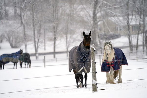 BEN GARVER — THE BERKSHIRE EAGLE<br /> Horses peer through a fence at  Wirtes Farm in Lanesborough, Monday, February 18, 2019.