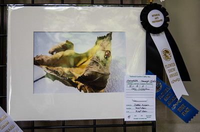 Debbie Moran Winner Rosette Botanical Arts