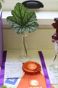 Section D Award of Merit: Heidi Muschick Heuchera 'Beauty Color'