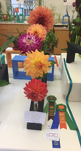 Claire Stepleton Winner Horticulture Excellence, Winner Collection Showcase