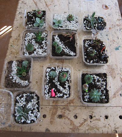 Hillside Terrarium Workshop
