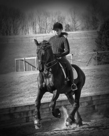 Horse for Sale: Simon