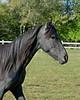 Tanzia - 20090929_2175