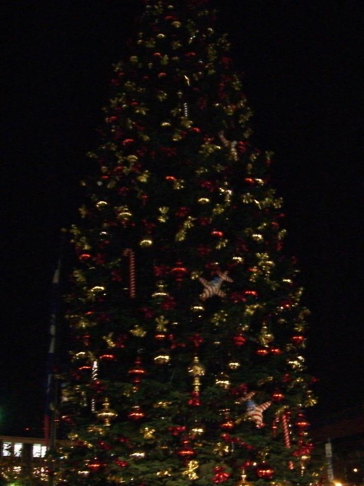 2005 11 19 Sat - Pier 39 Early Bird Christmas Tree