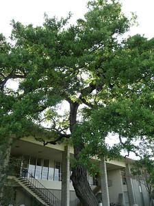A tree..... :)  Need I say more???
