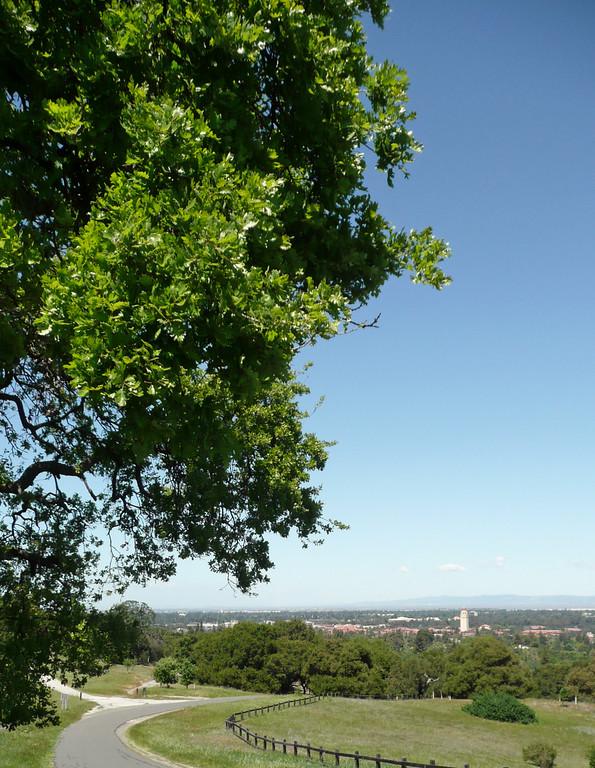 Overlooking Stanford Campus
