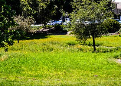 20140410-campus shots-0730