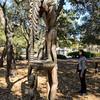 Rodin Sculpture Garden