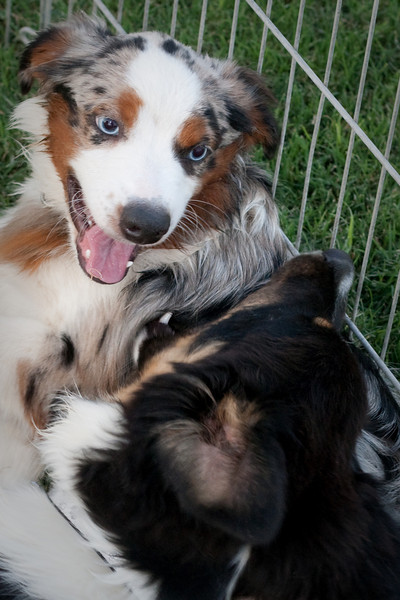 Best friends Indy and Izzy