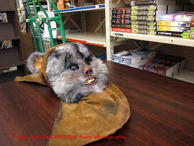 Ewok head