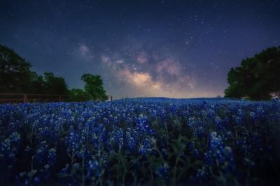 Cobalt hues &  midnight blues