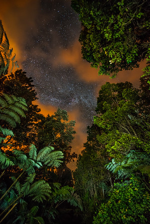 The Milky Way night sky peeks through the canopy of a cloud forest on the Big Island of Hawaii.