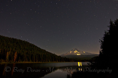 Trillium at midnight