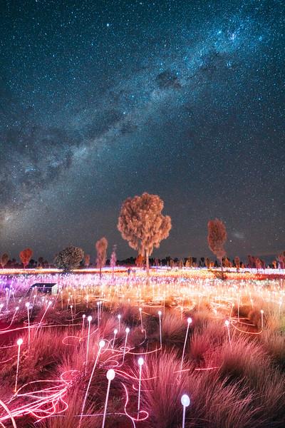 Field of Light II