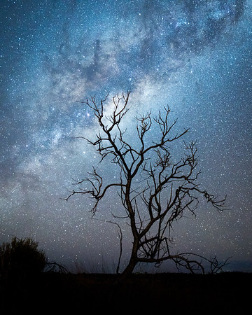 The silhouette of a dead tree pictured in front of a bright Milky Way over Uluru, Australia.