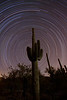 Star trails around a cactus in Tucson Mountain State Park, AZ.