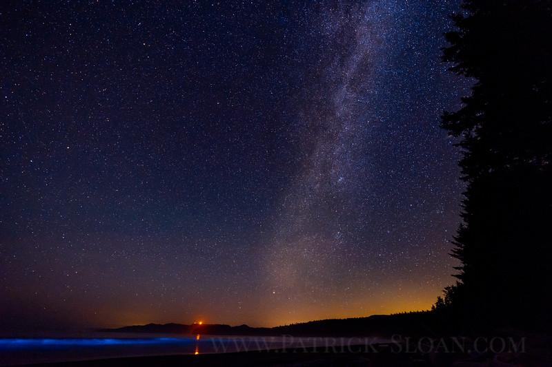 Shi Shi Bioluminescence