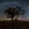 Perseid, Milkyway, Zodiacal Light, Pleiades, and Orion in Joshua Tree National Park