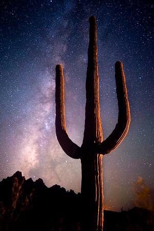 Saguaro Light