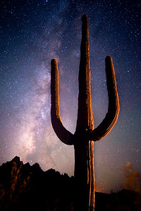 Saguaro Light